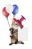 Festa dell'indipendenza Cat Holding Blank Sign Immagini Stock