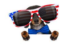 Festa dell'indipendenza quarta del cane di luglio Immagini Stock