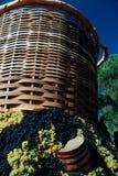 Festa dell`Uva, Impruneta. Tuscany Chianti wine festival, Italy. Wood barrell with bunches of wine grapes. Festa dell`Uva, Impruneta. Tuscany Chianti wine stock photo