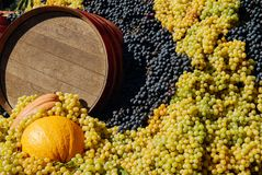 Festa dell`Uva, Impruneta. Tuscany Chianti wine festival, Italy. Wood barrell with bunches of wine grapes. Festa dell`Uva, Impruneta. Tuscany Chianti wine royalty free stock images