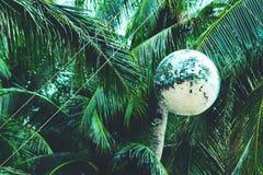 Festa della palla dello specchio del partito degli alberi del cocco fotografia stock libera da diritti
