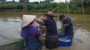 Festa di pesca Fotografie Stock Libere da Diritti
