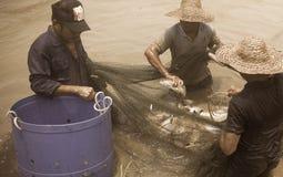 Festa di pesca Fotografie Stock