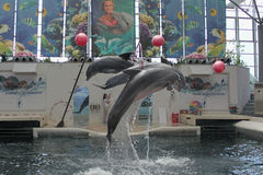 Festa Dolphinarium瓦尔纳 免版税库存图片