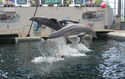 Festa Dolphinarium  Varna Stock Photography