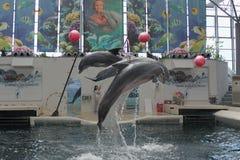 Festa Dolphinarium  Varna Royalty Free Stock Image