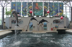 Festa Dolphinarium Varna. Playful dolphins in Festa Dolphinarium Varna, Bulgaria royalty free stock images