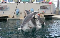 Festa Dolphinarium  Varna Stock Photos