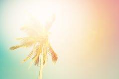 Festa tropicale della luce di Sun della palma del fondo Immagine Stock