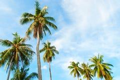 Festa tropicale della luce di Sun della palma del fondo Fotografia Stock