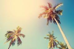 Festa tropicale della luce di Sun delle palme del fondo Fotografia Stock Libera da Diritti