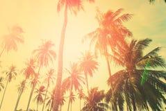 Festa tropicale della luce di Sun delle palme del fondo Immagine Stock