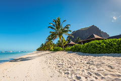 Feste di rilassamento nel paradiso tropicale Isola delle Mauritius Immagini Stock
