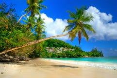 Feste tropicali Immagine Stock Libera da Diritti