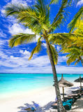 Feste tropicali di rilassamento - belle spiagge del isla delle Mauritius fotografia stock libera da diritti