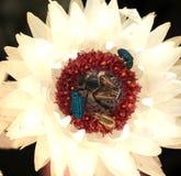 Festin d'insectes Photo libre de droits