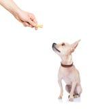 Festin de chien Images libres de droits