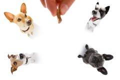 Festin de chiens avec le propriétaire images stock