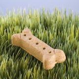 Festin de crabot s'étendant dans l'herbe. photographie stock