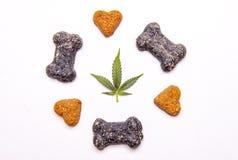 Festins de chien et feuilles de cannabis d'isolement au-dessus du fond blanc photos libres de droits