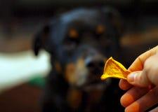 Festins faits maison déshydratés de chien de potiron avec le chien photo libre de droits