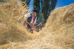 Festival of the Ñaco, El Cholar, Neuquen, Argentina. El Cholar - province of Neuquen - Argentina - February 11, 2017: Traditional wheat trillage with horses Stock Photos