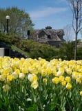 Festival 2012 del tulipán de Ottawa - tulipanes y edificio Fotografía de archivo libre de regalías