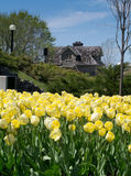 Festival 2012 del tulipano di Ottawa - tulipani e costruzione Fotografia Stock Libera da Diritti