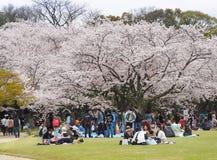 Festival appréciant japonais de fleurs de cerisier en parc Images libres de droits