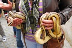 Festival av ormar, oskadlig orm för cervone Royaltyfria Bilder