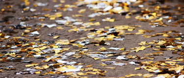 festival background with gold and silver sequins that lie on the pavement the road bokeh. Royalty Free Stock Photos