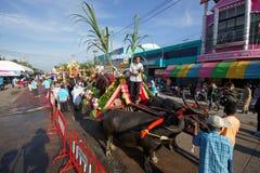 Festival Buffalo racing. Parade buffalo is festival buffalo racing at chonburi in thailand 18 October 2013 Stock Image
