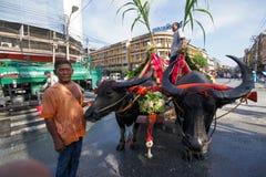 Festival Buffalo racing. Parade buffalo is festival buffalo racing at chonburi in thailand 18 October 2013 Royalty Free Stock Photography