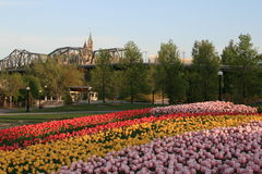 Festival canadense do Tulip imagens de stock