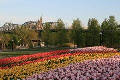 Festival canadien de tulipe images stock