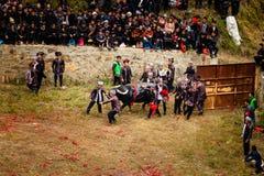 Festival combattente del bufalo d'acqua nella provincia di Guizhou del villaggio di Heko Cina fotografia stock libera da diritti