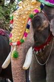 Festival d'éléphant d'Inde Images libres de droits