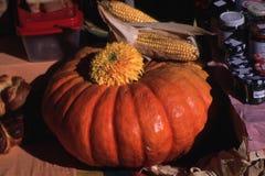 Festival da colheita de milho da abóbora em Europa Fotos de Stock