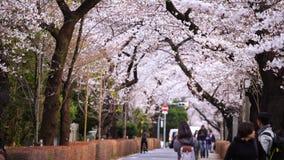 Festival da flor de cerejeira em Aoyama Cemetery Aoyama Cemetery é um ponto popular durante a estação de mola video estoque