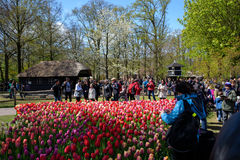 Festival da flor em Keukenhof na mola em março de 2017 Fotos de Stock