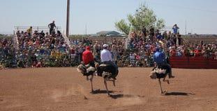Festival da raça da avestruz da equitação fotografia de stock royalty free