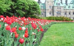 Festival da tulipa de Ottawa, construção com muitas tulipas no primeiro plano, monte do parlamento do parlamento Foco seletivo fotografia de stock royalty free