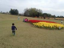 Festival das tulipas Imagem de Stock