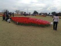 Festival das tulipas Fotografia de Stock Royalty Free
