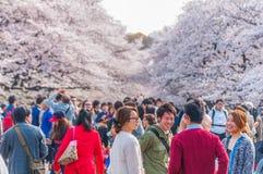 Festival de Cherry Blossoms en parc d'Ueno, Tokyo, Japon photographie stock