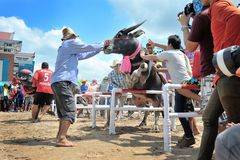 Festival de competência do búfalo Foto de Stock Royalty Free