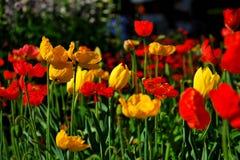 Festival de fleur chez Toowoomba Photo stock