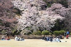 Festival de fleur de cerise Images libres de droits
