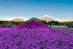 Festival de Fuji Shibazakura Fotografía de archivo libre de regalías