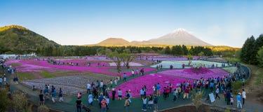 Festival de Fuji Shibazakura Imagen de archivo
